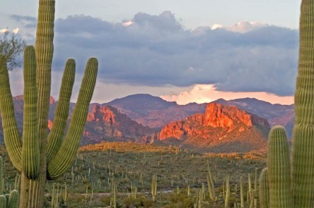 Stunning views of the Tucson desert