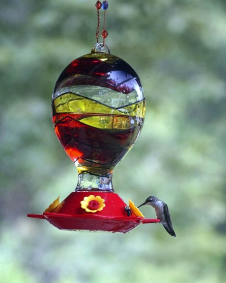 Hummingbrid at Bird Feeder