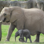 7 month old baby Nandi with her mother.