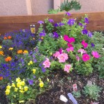 Marigolds, petunias and snapdragons fill our raised garden bed!
