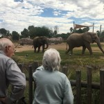 Residents looking at the elephants.
