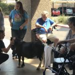 Residents and associates enjoying time with Buddy the Miniature horse.